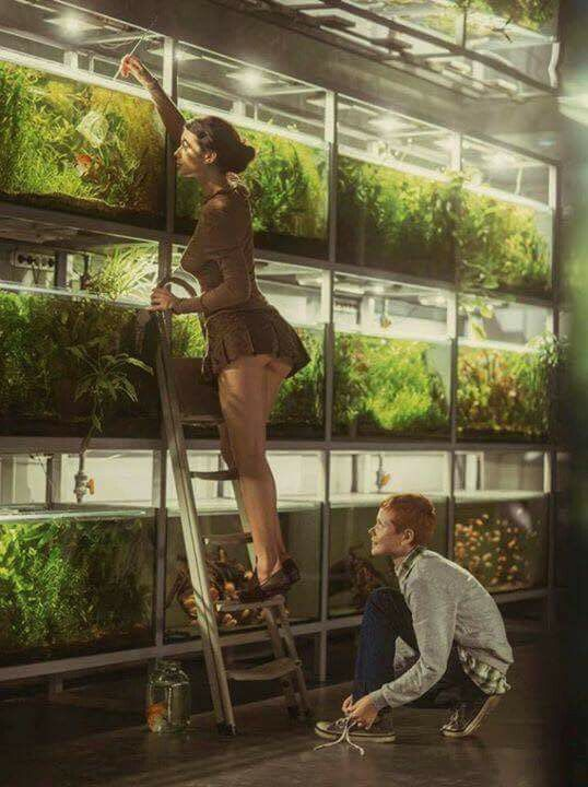 What a fishroom