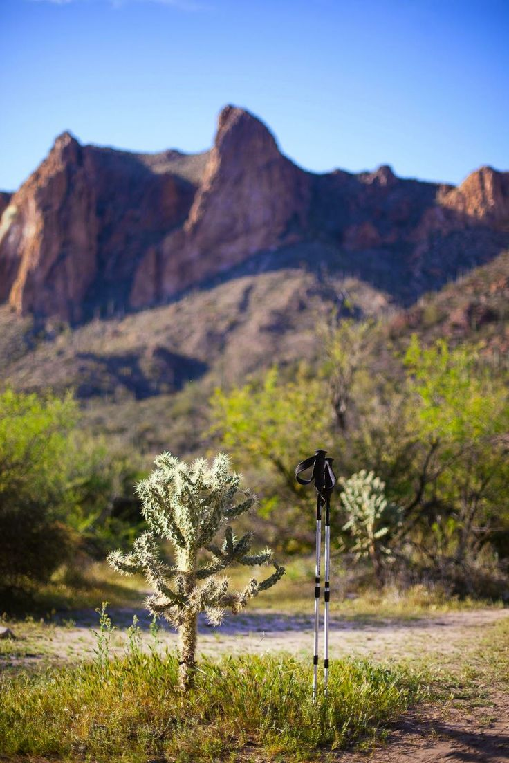 Cholla Cacti in the Superstition Mountains / blog.jchongstudio.com