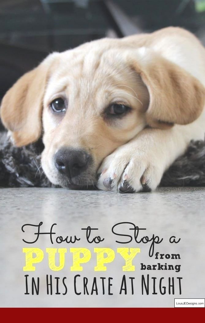 How To Train Your Dog To Stop Barking At Visitors And Pics Of
