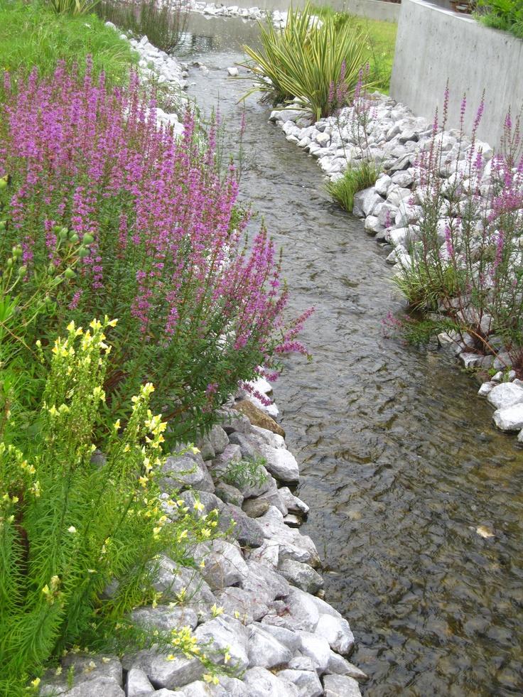 Eglin Afb Eod Beq likewise Viburnam Eskimo also Idee Terrasse additionally Index besides Catalogue Item. on drought tolerant landscaping