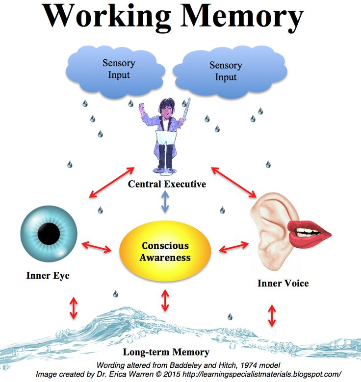 the working memory Working memory is one of the most important concepts in understanding and improving your memory your working memory capacity is a critical factor in determining your ability to.
