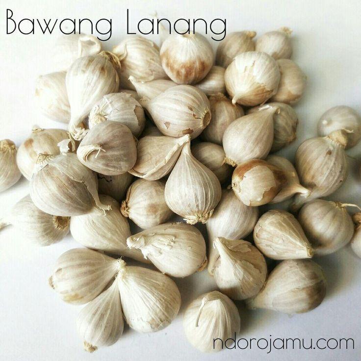 Bawang Putih Lanang