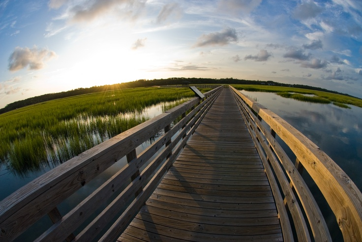 51 best images about wildlife in myrtle beach area on for Murrells inlet fishing