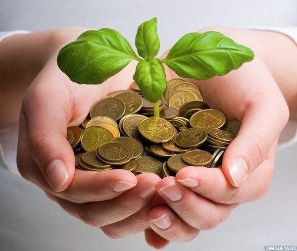 Картинка 600x507 | Горсть монет в ладонях, из которой проростает зелёное растение | Руки, Деньги, Растения, Монеты, фото