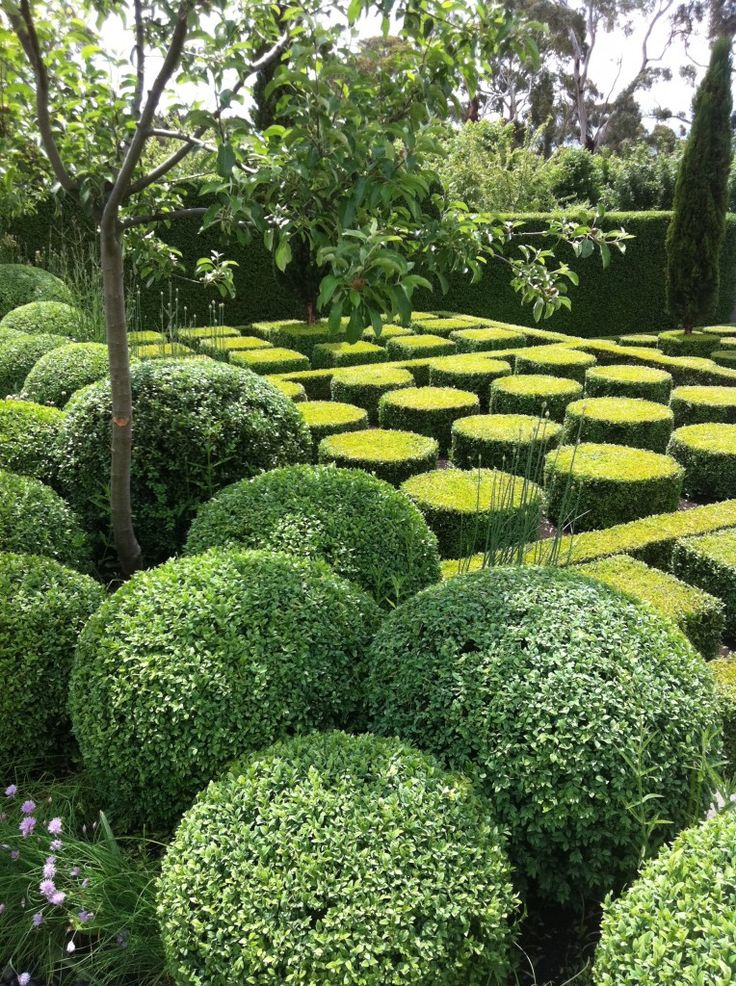 124 best images about knot gardens and topiaries on pinterest for Topiary garden designs