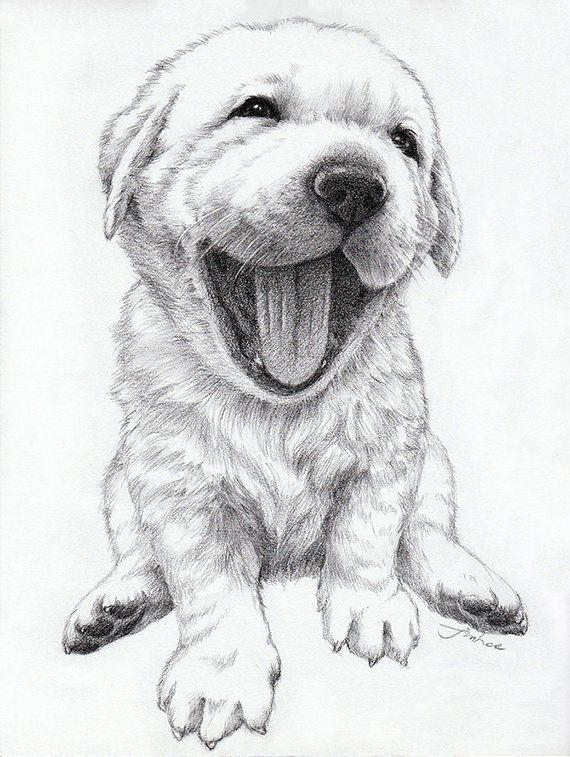Custom Portrait Pet Portrait Drawing Dog Cat Etc Retriever