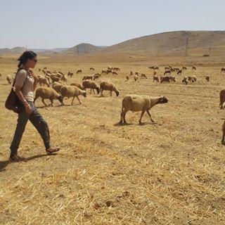 La nostra CEO Nasia Burnet in visita ai Monti Atlas, dove vengono allevate pecore di una razza autoctona unica, la cui lana si impiega per realizzare i nostri preziosissimi tappeti Beni Ourain😍🐏🔝Una testimonianza dal Marocco❤️  Curiosi di saperne di più sui nostri tappeti berberi? Più informazioni qui: http://www.sukhi.it/informazioni-sui-tappeti-beni-ourain
