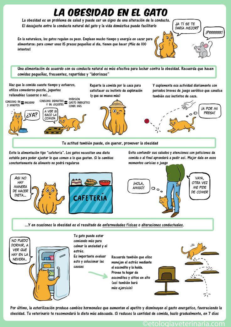 Obesidad en gatos