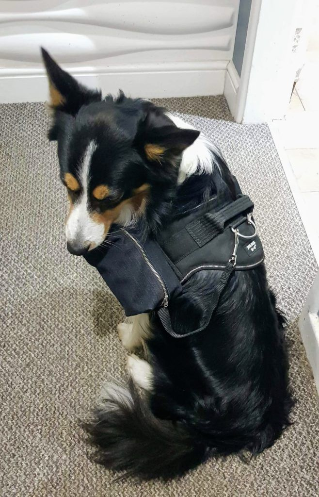 How To Make A Diy Dog Backpack Using A Julius K9 Harness Dog