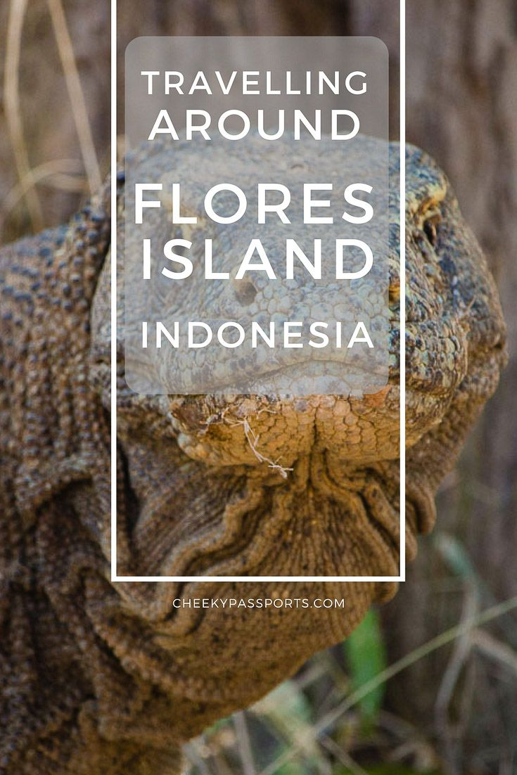 Travelling around Flores Island, Indonesia, Home of the Komodo Dragon