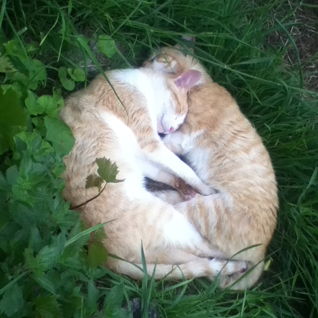 A cuddle of kittens