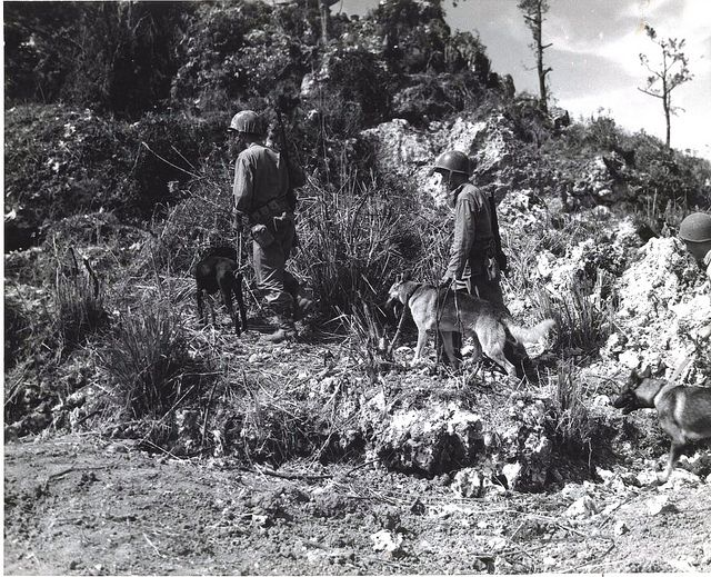 War Dog patrol on Okinawa, June 1945 by Marine Corps Archives & Special Collections, via Flickr. Three Marines and their War Dogs search for Japanese holdouts on Okinawa, June 1945.    From the War Dogs Photograph Collection, United States Marine Corps Archives & Special Collections.    OFFICIAL USMC PHOTOGRAPH