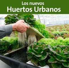 Descubre la nueva forma de cultivar sin suelo por medio de la acuaponia. #BoletinBI #Ecologia