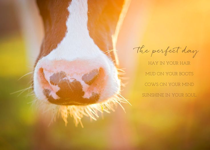 The Perfect Day - Hay in your hair, Mud on your boots, Cows on your mind, Sunshine in your soul   Farmgirl Photography