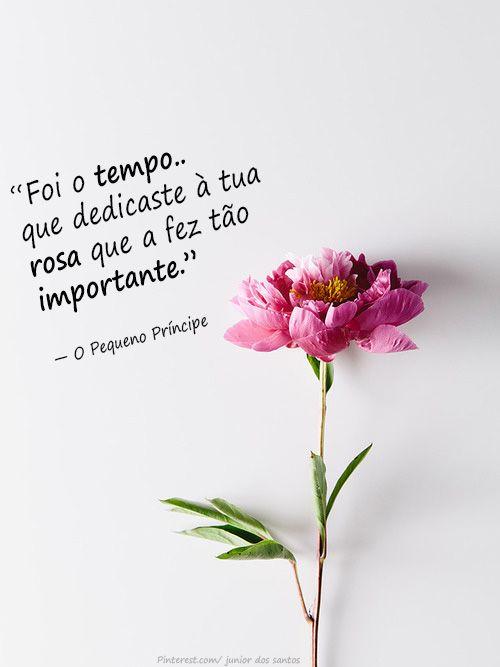 Foi o tempo que dedicaste à tua rosa que a fez tão importante. — O Pequeno Príncipe