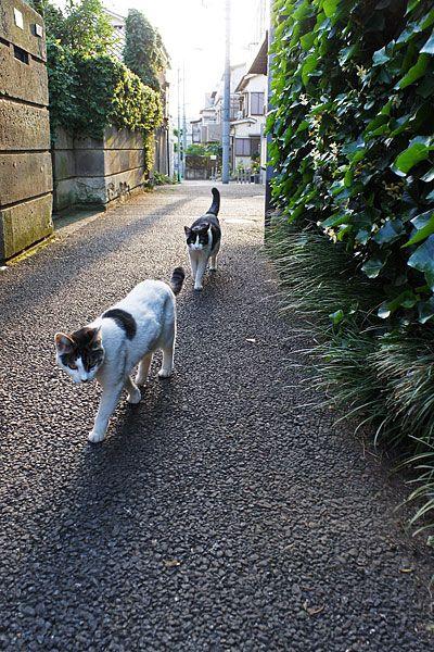 Toshima city, Tokyo