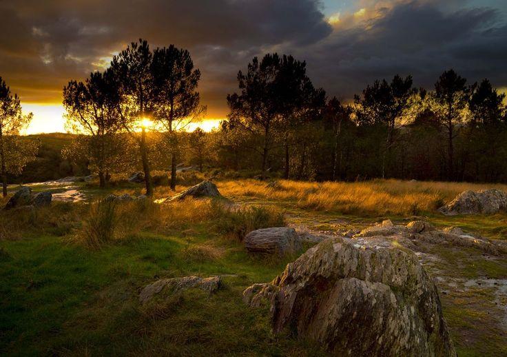 Brocéliande? Ça reste une forêt. | 30 raisons de ne jamais aller en Bretagne