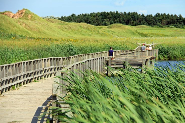 PEI National Park - Dunelands: A short trail connecting the campground to the Oceanview Lookoff near Cavendish Beach, Dunelands features a boardwalk threading between overhanging sand dunes and a barachois pond.