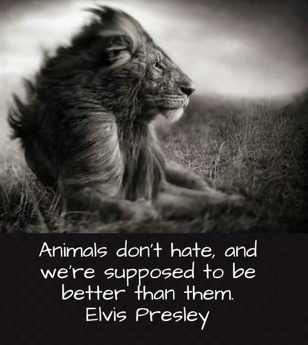 Sayings About Anger And Rage: Best 25+ Quotes About Animals Ideas On Pinterest