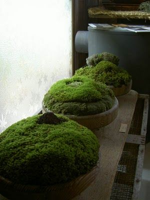 De la mousse encore de la mousse à l'intérieur comme à l'extérieur, elle donne une ambiance rès nature et plein de douceur moelleux. Idée www.fengshuiconsult.be FcC moss bowls