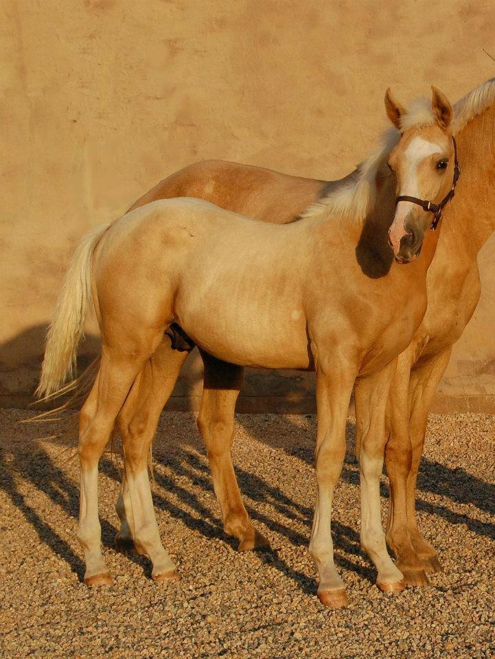 Maximus - magnificent 6 month old foal taken away from loving owner way to soon. (April 2013).  RIP beautiful baby.