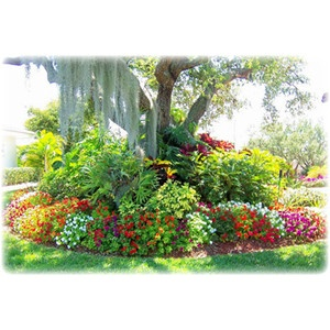 I want bright colors in our front yard!Gardens Ideas, Landscapes Ideas, Gardens Design Ideas, Front Yards, Curb Appeal, Flower Gardens, Flower Beds, Tropical Gardens, Gardens Plants