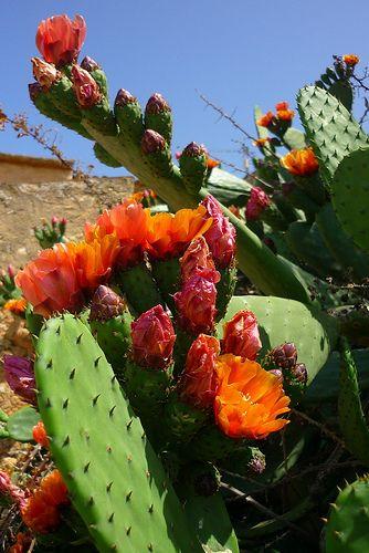 Flor de cactus,   Flores en el mar (2)    Mientra haya flores , habrá primaveras !