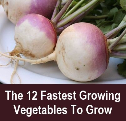 The 12 fastest growing vegetables to grow. From seed to your plate in record time - find out the fastest vegetables of all to mature. #frugality #gardening