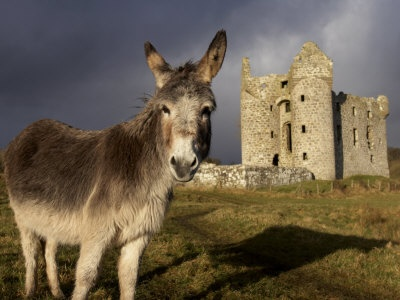 Mones Castle - Ireland....: Moning Castles, Century Monea, County Fermanagh, 17Th Century, Monea Castles, Irish Castles, Northern Ireland, Andrew Mcconnel, Donkeys Graze