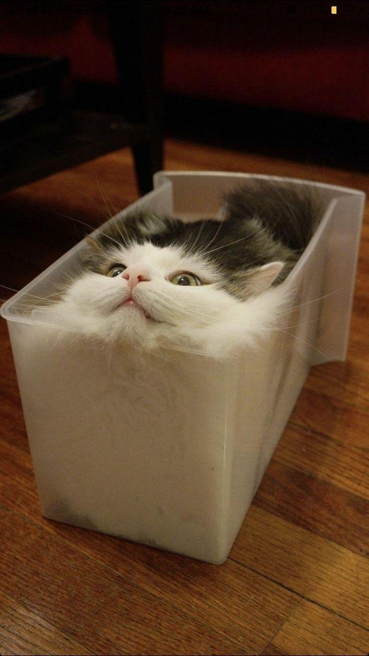 Woran man sieht, dass es zu warm ist: Die Katzen schmilzen