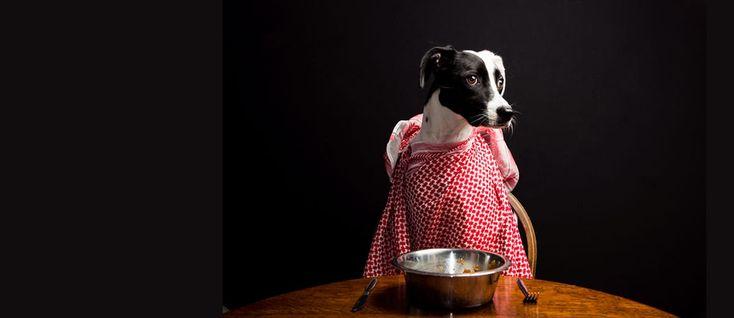 Sappiamo davvero cosa diamo da mangiare ai nostri animali? Dopo l'inchiesta su Moncler, Report porta l'attenzione sulla salute degli animali domestici, compagni del 33% degli italiani, di cui 14 milioni sono proprietari di cani e gatti. Partiamo con alcuni dati: nell'ultimo anno sono stati spesi 128 milioni di euro, solo per gli snack per cani …