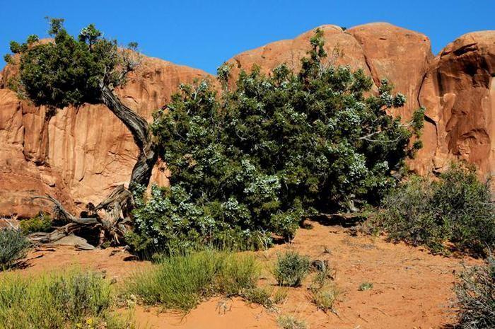 Как растут фрукты. Фотографии деревьев и кустарников, на которых растут плоды. Обсуждение на LiveInternet - Российский Сервис Онлайн-Дневников