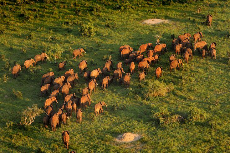 #Elephants #PreserveOurFuture #LoveAfrica