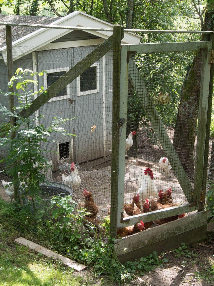 """Du trenger ikke bo på landet eller ha stor hage for å ha høner. Og har du høner har du både hyggelig selskap, noen til å plukke babysnegler, """"luke"""", gratis gjødsel, samt herlige ferske og ekstremt etiske egg :) Jeg har ikke høner selv, men jeg har samlet inn informasjon fra andre hageeiere. I denne …"""