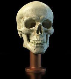 Anatomi Kemikler 104 / Anatomy Bones 104 #Anatomi #anatomy #kemik #bones #drawing #design #sketch #sketching #character #digital #digitalpainting