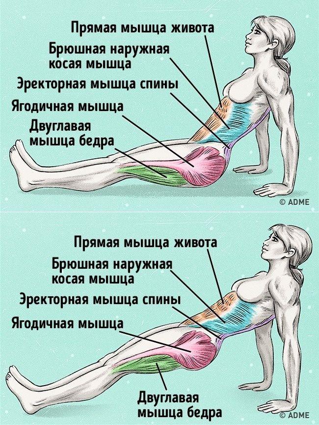 Упражнения для брюшных мышц в картинках для отведения