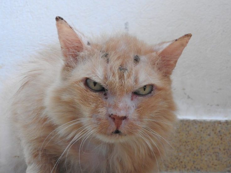 Here's the heartwarming story ofCinnamon, an elderly cat of 17 years old who, after a difficult life,had the chance to open her heart again. Cinnamon had a home in which she lived seventeen…