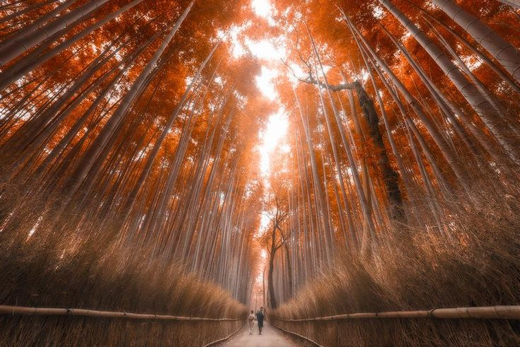 Kyoto Bamboo Forest by Jimmy Mcintyre: http://goo.gl/n5IxZd