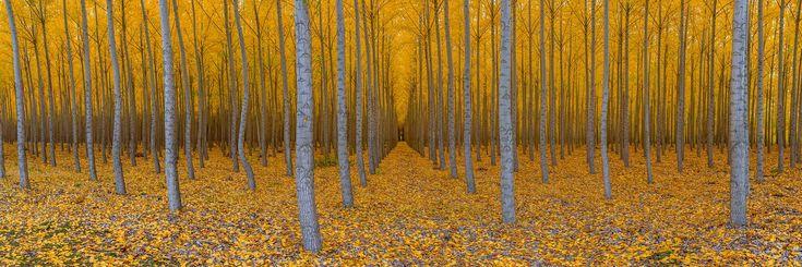 Colors of Fall   Boardman, Oregon