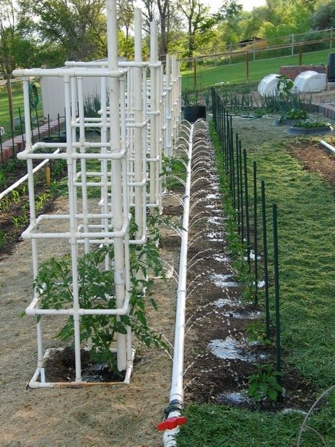 PVC tomato cage. Gonna have to try this next year seeing as the metal one just can't hold up the plants. Aldo love the watering idea.