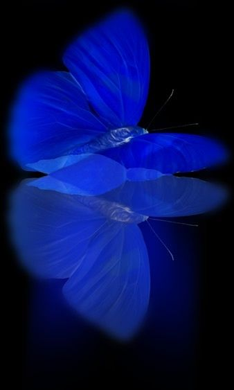Blue butterfly~ by Sassyscribe
