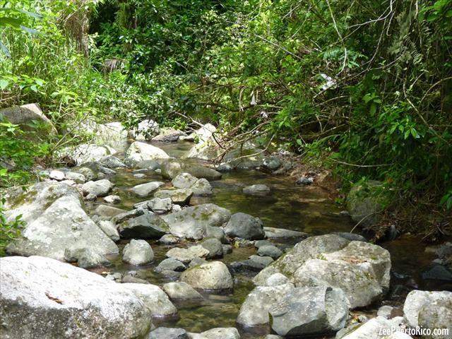 Toro Negro Forest - OROCOVIS, JAYUYA, JUANA DÍAZ