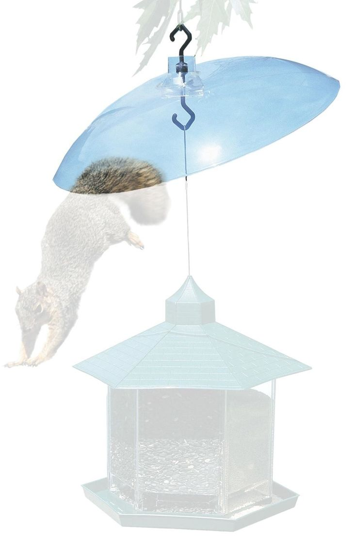 Squirrel Baffle in Clear