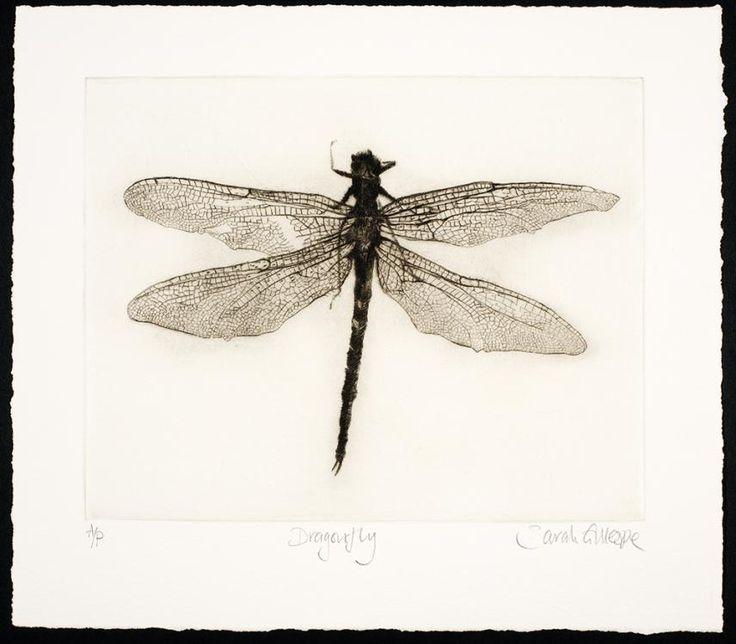 Sarah Gillespie (British). Dragonfly. Drypoint engraving.