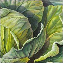 cabbage- Susannah Blaxill