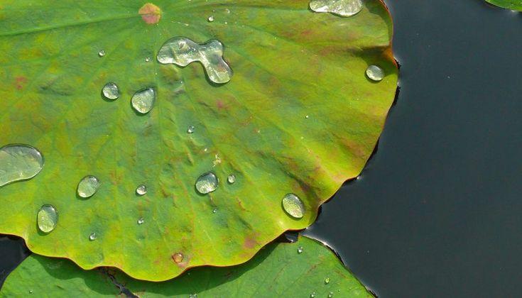 lotuseffekt-fuer-glasscheiben