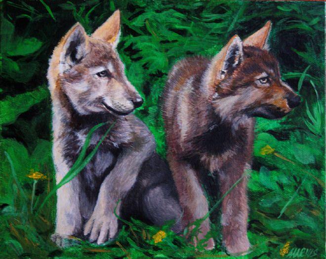 Wolf puppies - Cuccioli di lupo #art #gifts