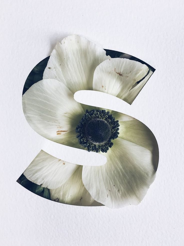 Stunning Flower Typography Project by Julia Losfelt This amazing project by Graphic Designer Julia Losfelt combines cutting flowers and photography in delicate and minimalist floral letters. Meant for design or botanic lovers flowers bring an organic touch to typography. You can check out her work on her website or on Instagram #xemtvhay