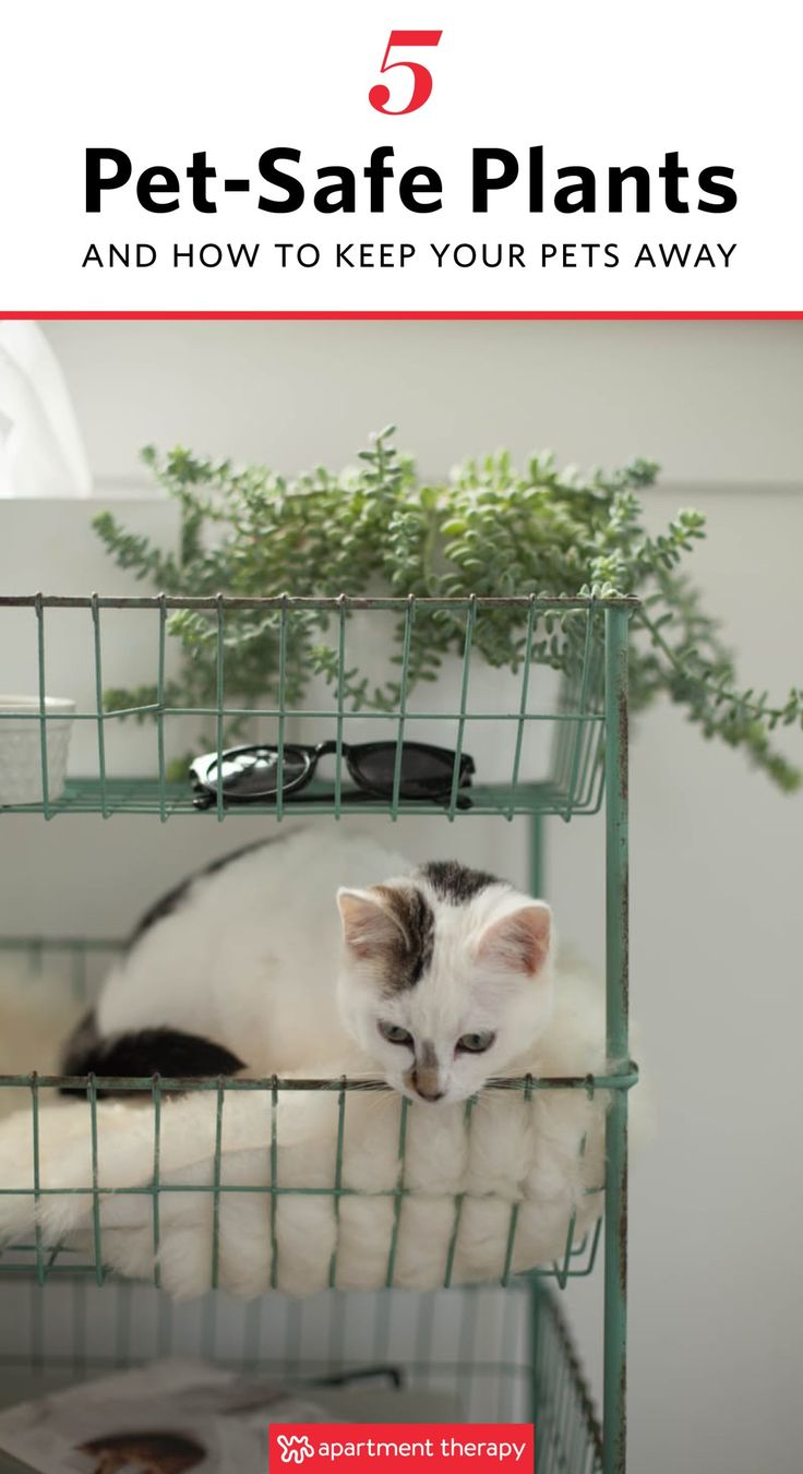 How to make a low cost ikea cat bed apartment therapy -  5 Pet Safe Plants How To Keep Your Furry Friends Away From Them Anyway