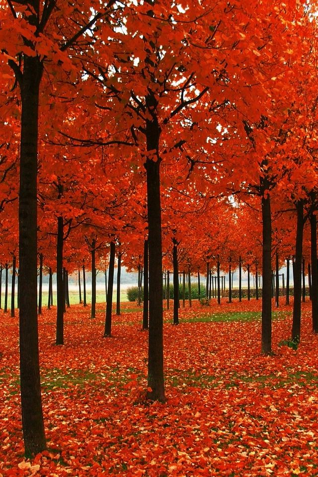awesome bright autumn scenery - photo #26